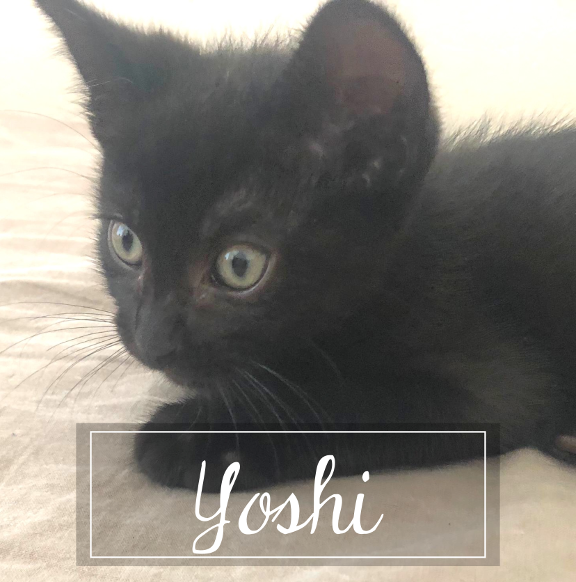 LA CHATVERNE  Yoshiu11