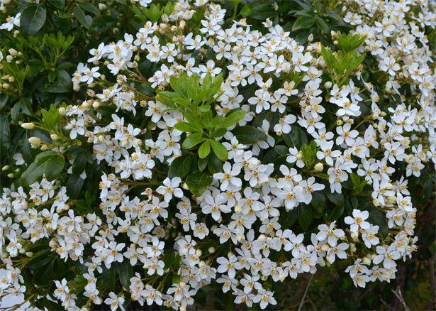 Fleurs de saison - Page 17 Choisy10