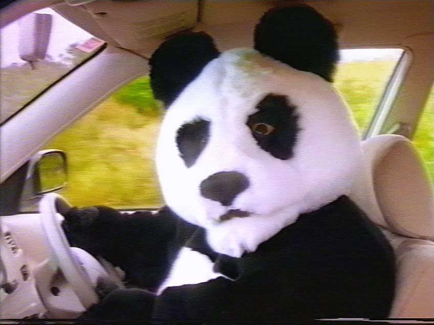 Un jour, un instant, une photo - Page 49 Panda_10