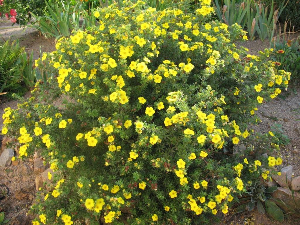 Fleurs de saison - Page 26 Potent12
