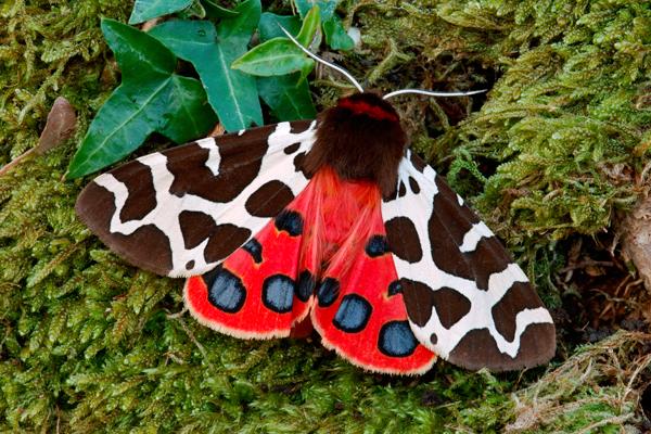 Papillons Zocail10