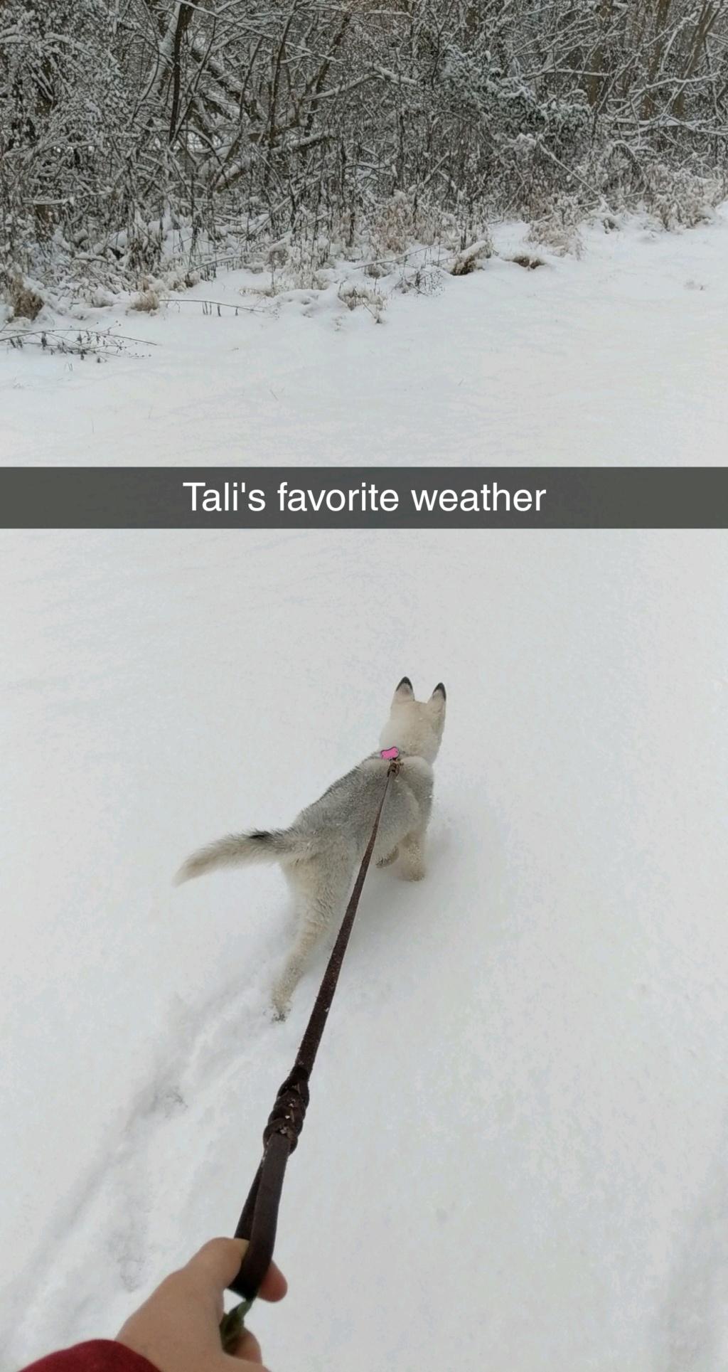 Tali's Scrapbook Snapch10