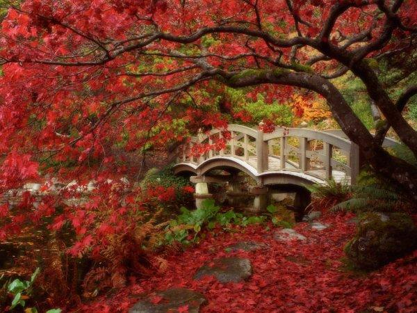 16 octobre, à la Sainte Edwige, préférez la pipe aux tiges.  811
