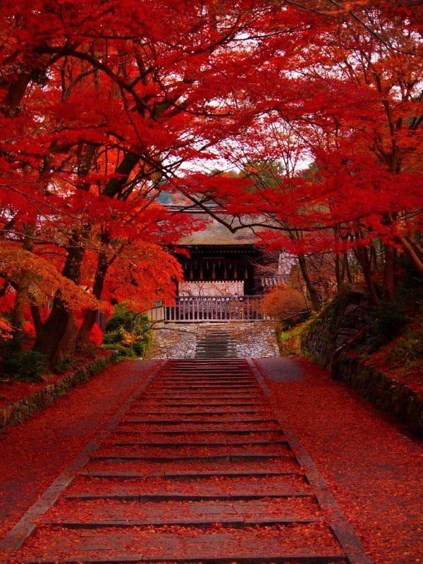 Le 23 septembre – C'est l'automne ! Que vos fumées embrument la chevelure peinte des arbres ! Proxy_32
