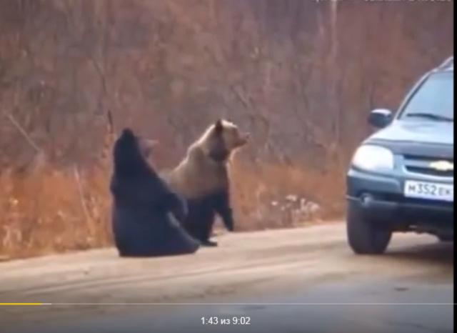 Смешные животные (видео) - Страница 3 Scree847