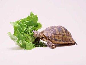 la tortuga Tortug10