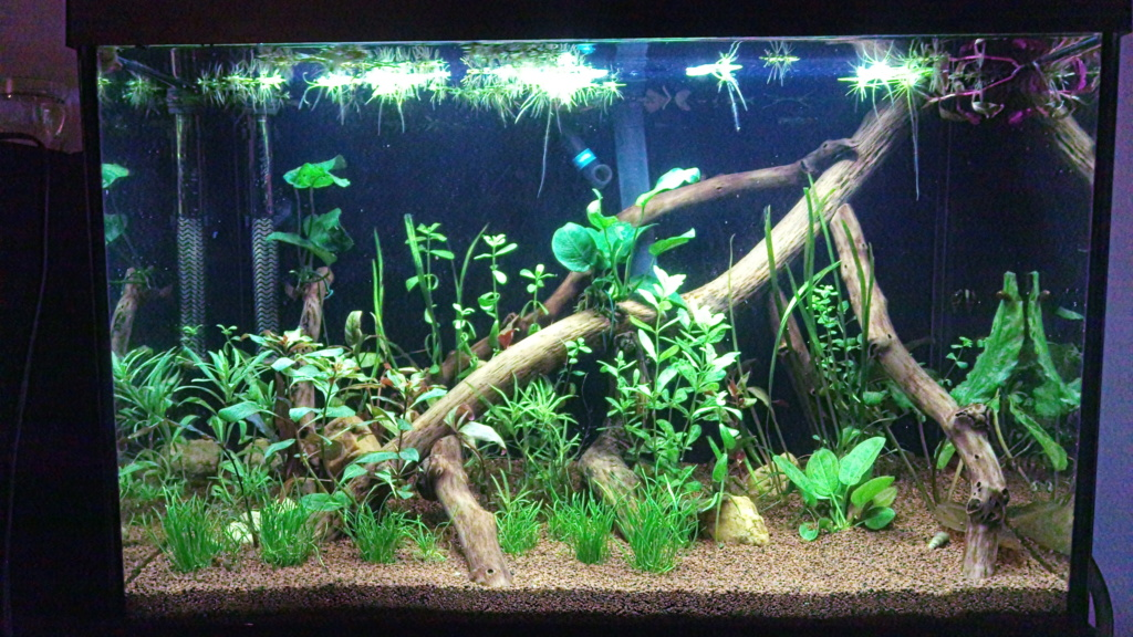 Mon 70 Litres naturel Lowtech Aqua0210