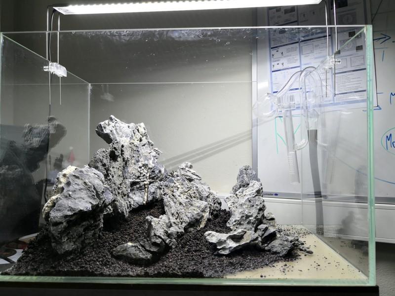 Préparation d'un mountain scape / iwagumi 20190218