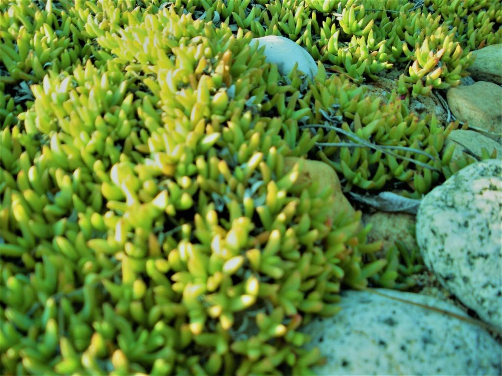 Aus einer Wüste entsteht ein Exotengarten - Seite 24 Imgp0310