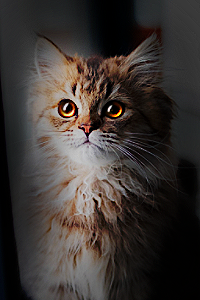[KITTEN SEARCH] into the blue memory Zonder10
