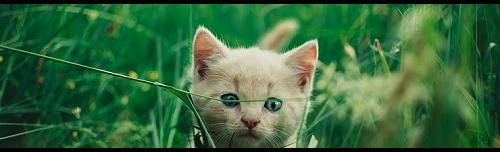 Wat zouden jouw kattennamen in het nederlands zijn? - Pagina 13 Hermit10