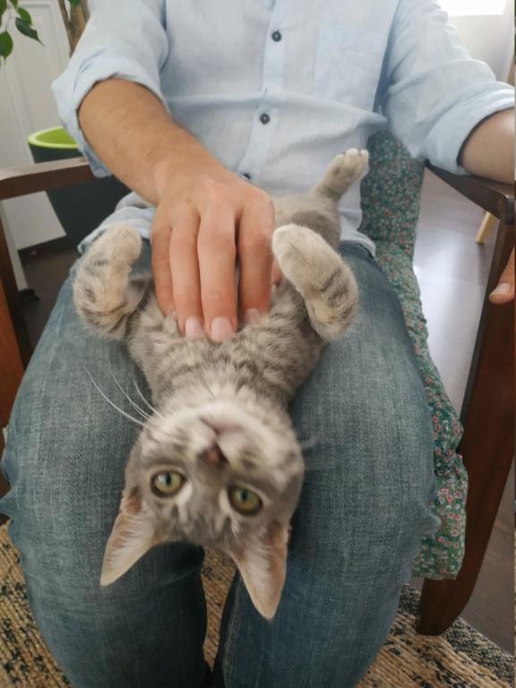 PAMA, chatonne européenne noire, née le 28.04.19 Img_2013