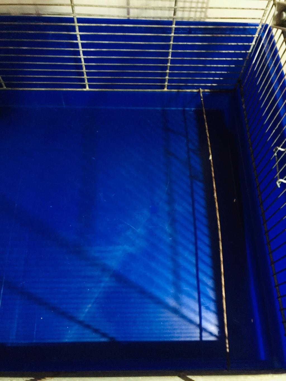3 cages sur Paris - Avant la semaine prochaine ! Img_9313