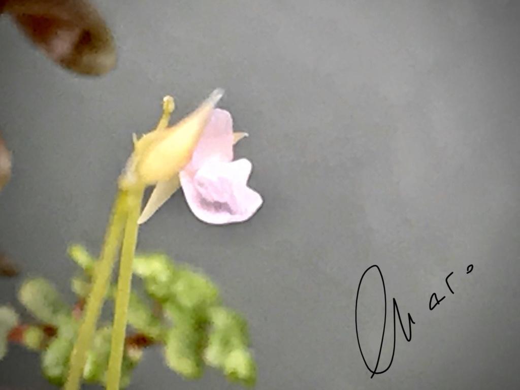Unas flores 3c003810