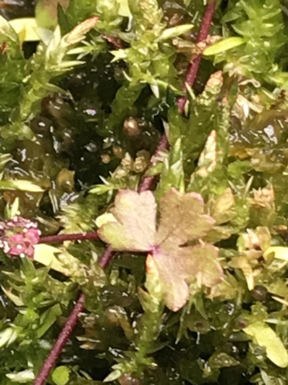 Unas flores 46338810