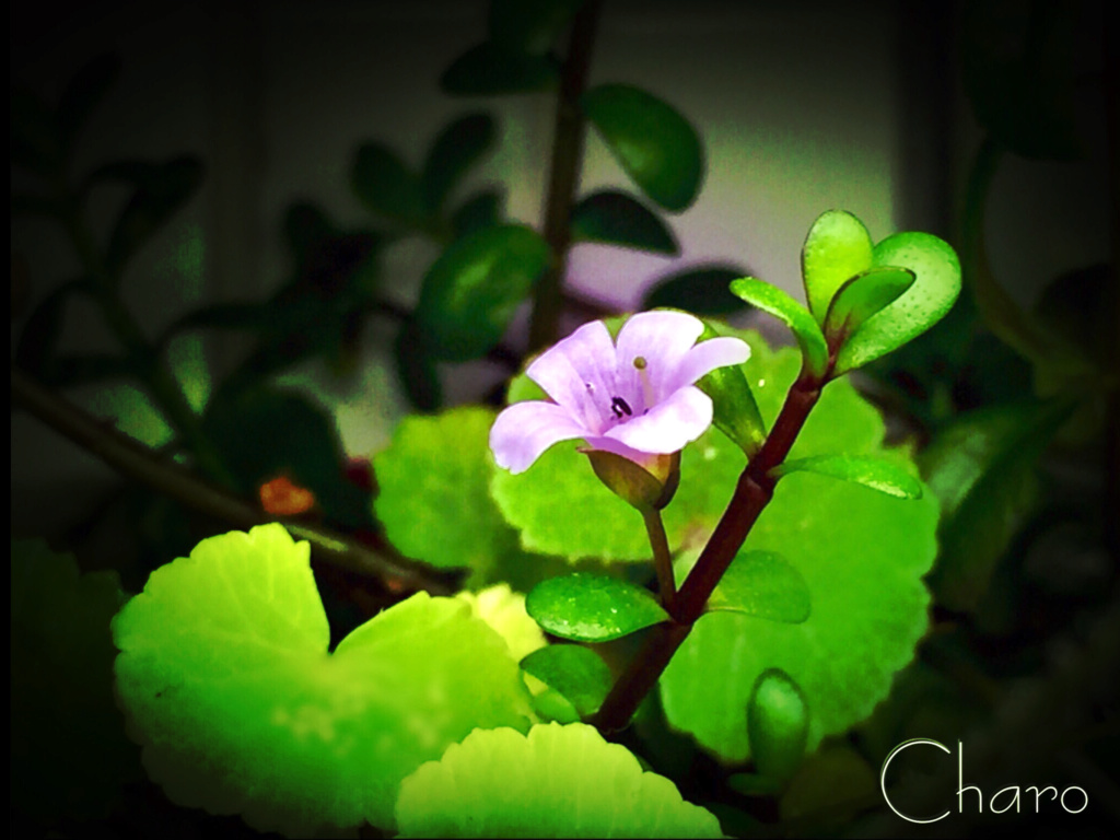 Unas flores D032f610