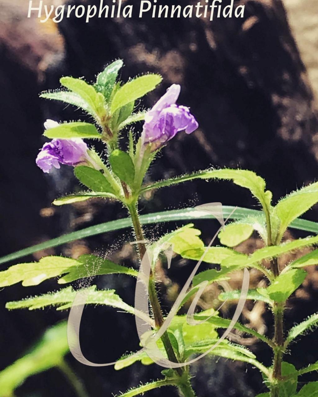 Unas flores Ead3f110