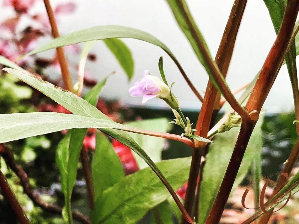 Unas flores Ec634a10