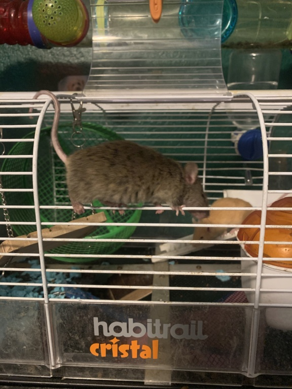 Mice seem to have a round belly- problem? 5a06b810