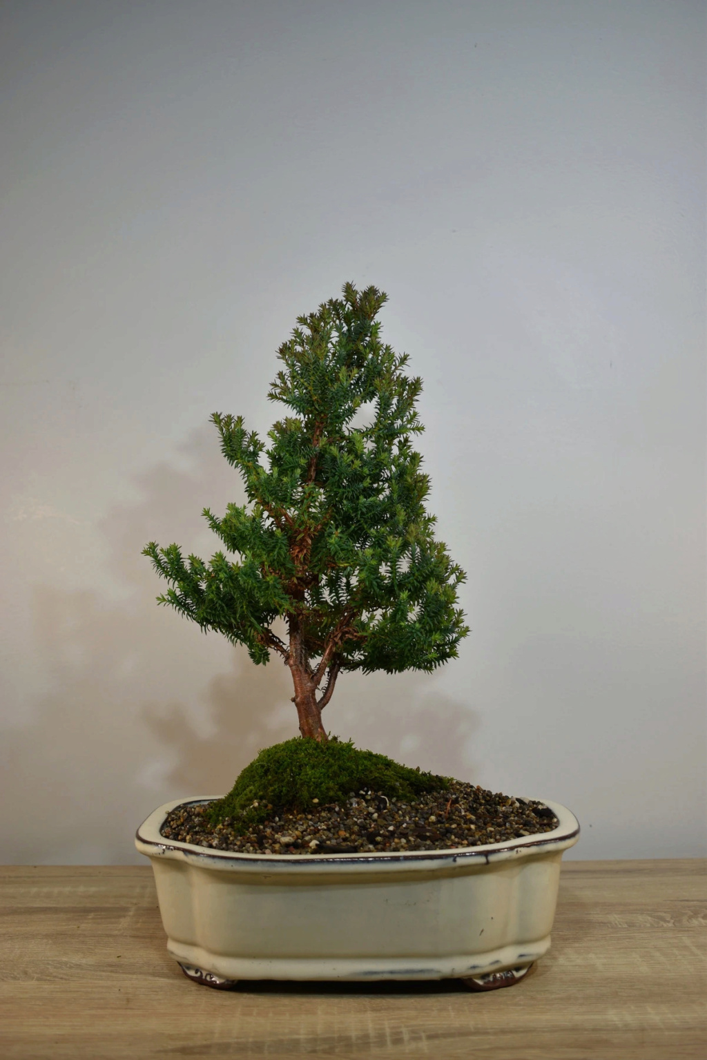 Can you help me to identify this tree? Ac963b10