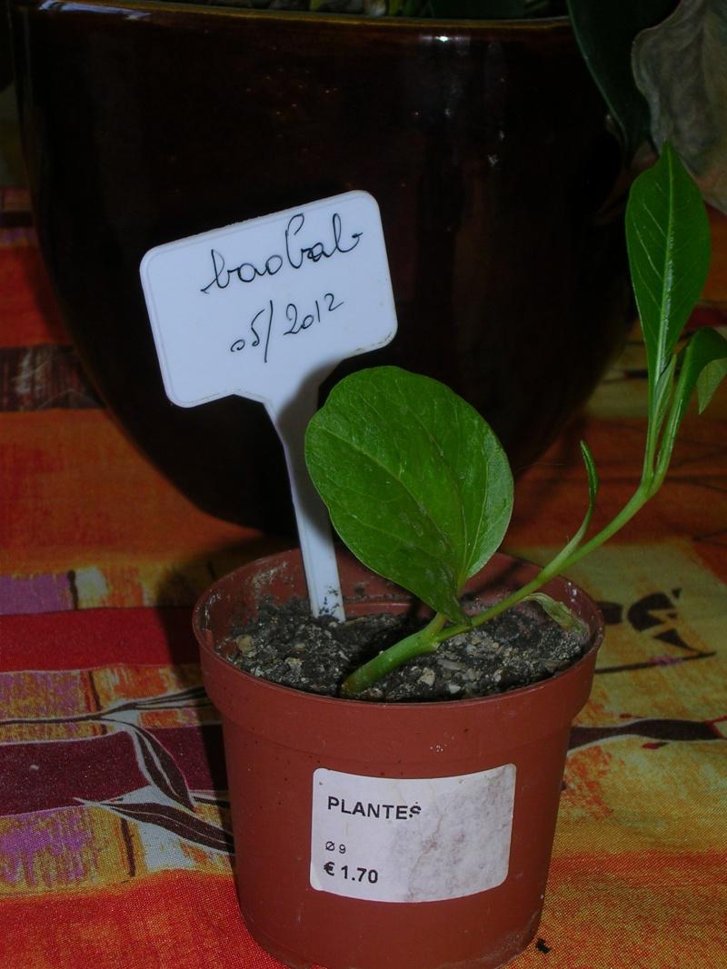 mon petit baobab Dscn5222