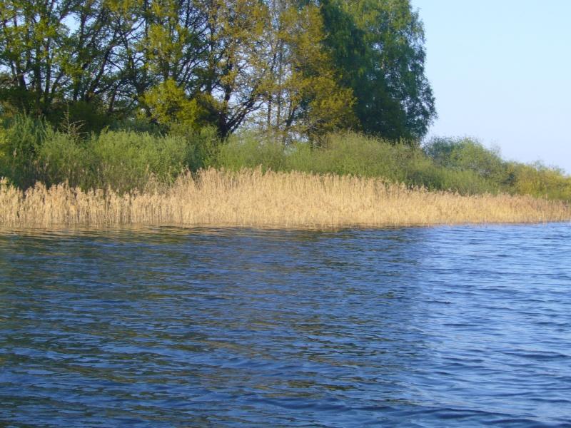 Session au lac de Bouzey (88) P1010317