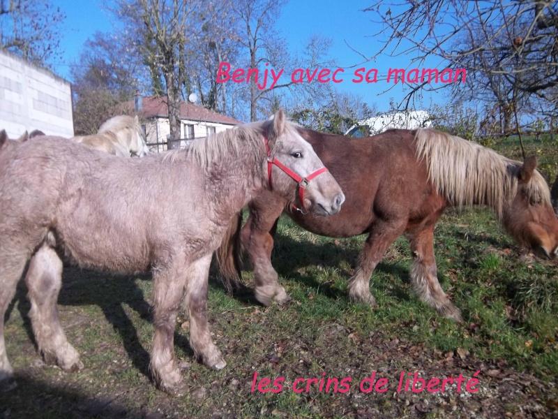 (Dpt 70) - Benjy - croisé Comtois, sauvé par Nath88 !!!!!!!!!!!!!!!!! (Janvier 2012) - Page 17 104_1222