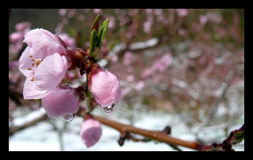 Photos Andance et environs au fil des saisons - Page 2 P1320117