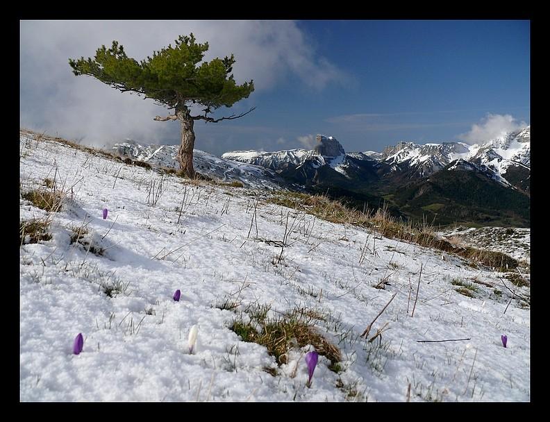 Balade vers le Mont-Aiguille P1350210