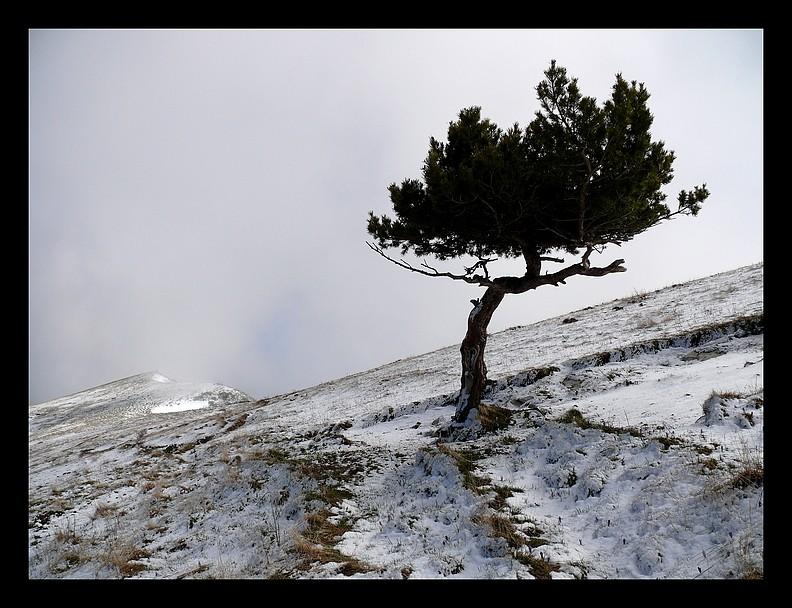 Balade vers le Mont-Aiguille P1350211