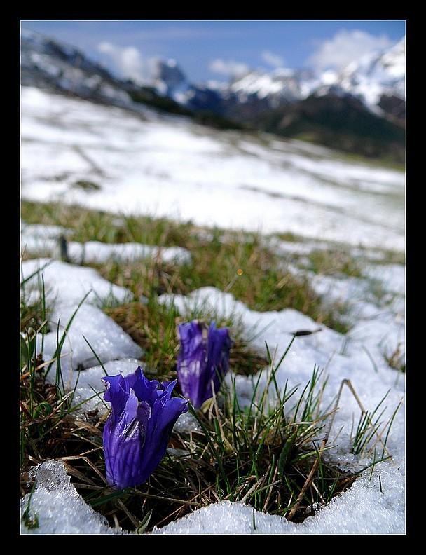 Balade vers le Mont-Aiguille P1350214