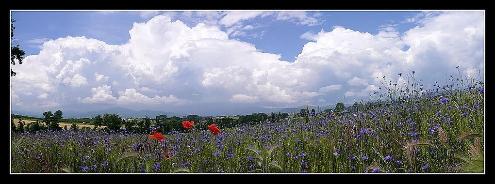 Photos Andance et environs au fil des saisons - Page 3 P1360316