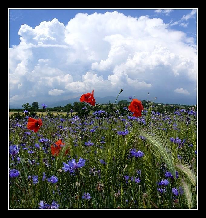 Photos Andance et environs au fil des saisons - Page 3 P1360318