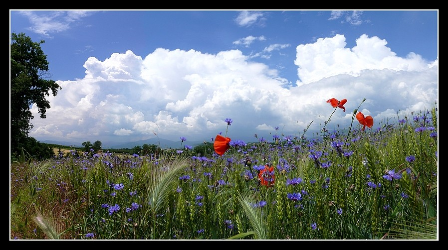 Photos Andance et environs au fil des saisons - Page 3 P1360319