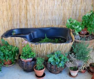 """Des conseils pour un """"bassin"""" d'appartement.  Dsc_0012"""