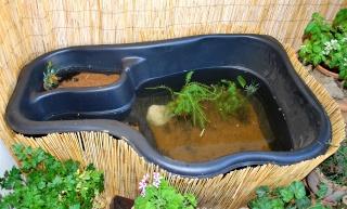 """Des conseils pour un """"bassin"""" d'appartement.  Dsc_0013"""