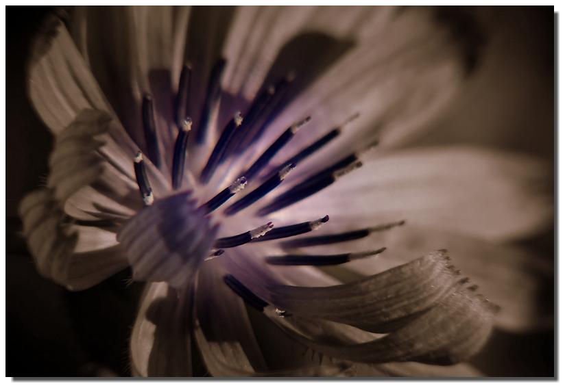 petite fleure sauvage Copie_41