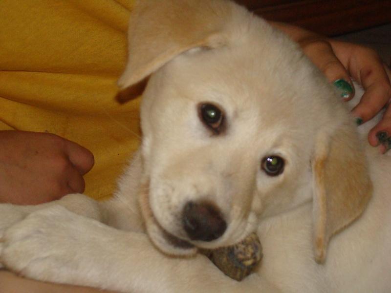 Le labrador (avec video et photos de Djuna) Dsc01211