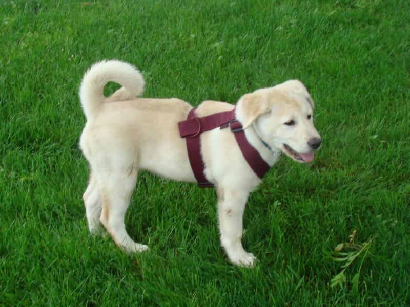 Le labrador (avec video et photos de Djuna) Dsc01410