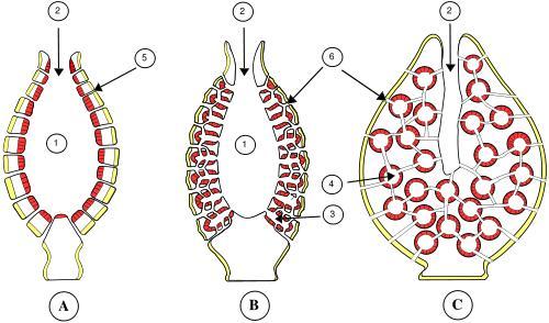 Les éponges Eponge10