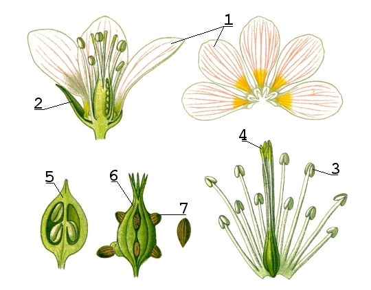une fleur Fleur12