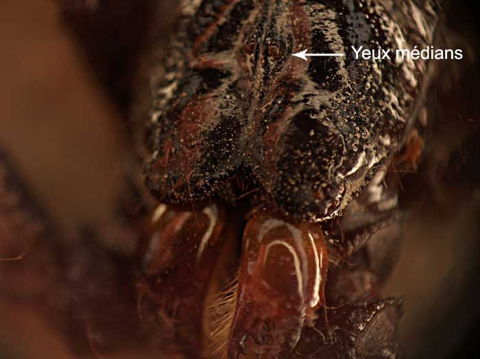 Scorpion Scorpi10