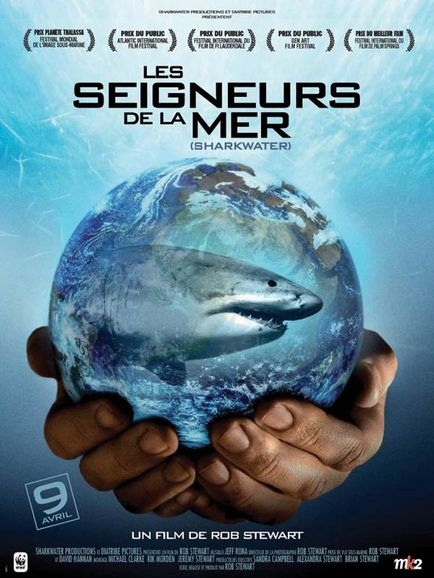 le requin baleine Seigne10
