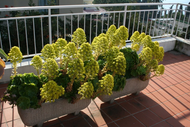 Une terrasse à Menton Aeoniu12