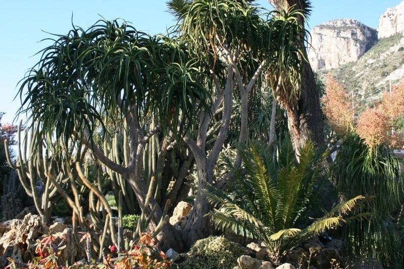 Aloe à identifier JArdin de Philippe, La Réunion Aloe_b13