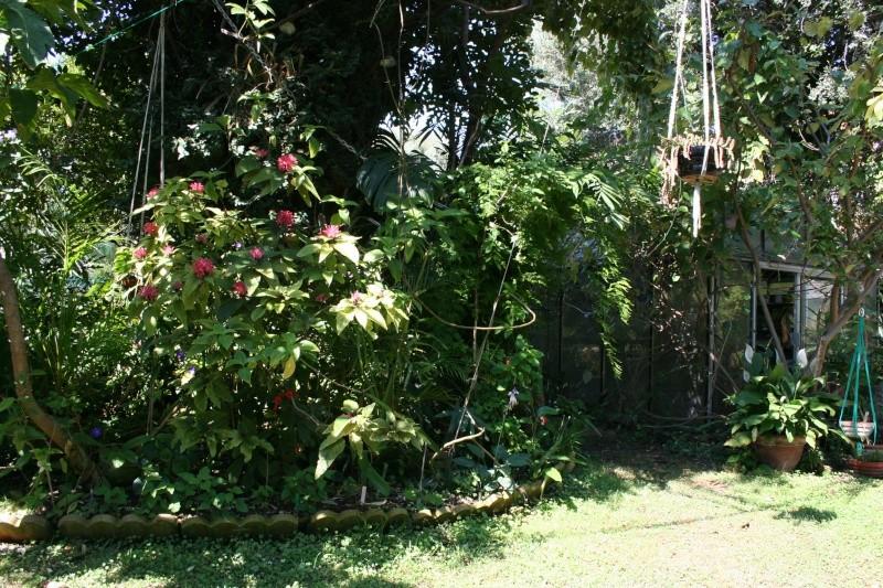 Ambiance tropicale de juillet Ambian21