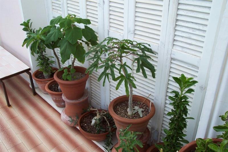 Mon balcon aux frileuses en cette fin juillet Ambian22