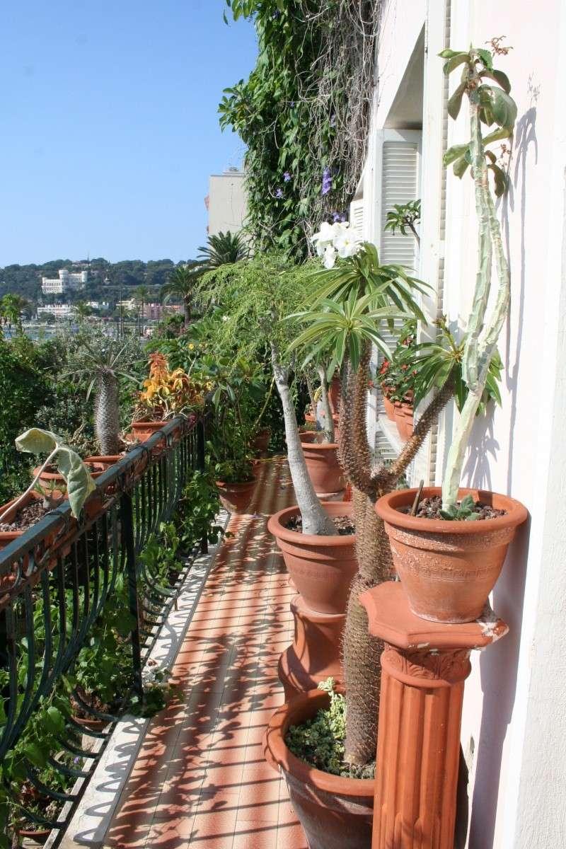 Mon balcon aux frileuses en cette fin juillet Balcon15