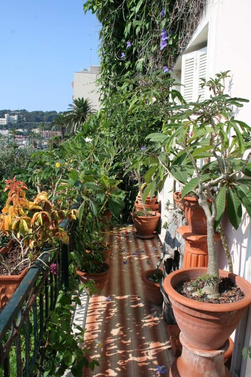 Mon balcon aux frileuses en cette fin juillet Balcon16