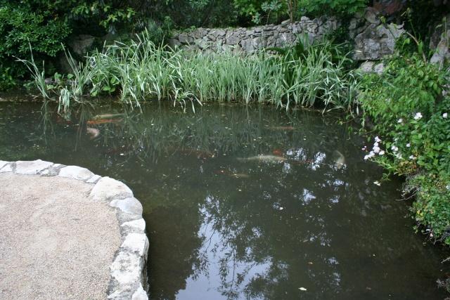 Un jardin d'eau extraordinaire Bassin14
